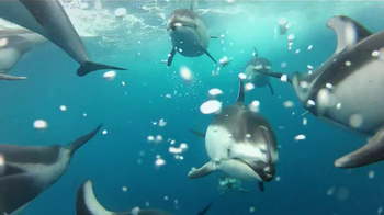 GoPro HERO3 TV Spot, 'Swimming with Dolphins' Song by Y La Bamba