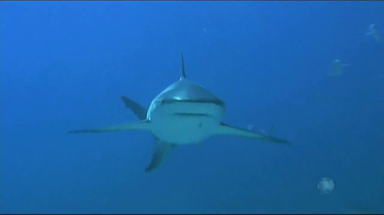 Discovery Channel Save the Sharks TV Spot Featuring Paul Walker - Thumbnail 1