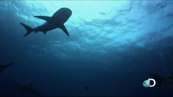 Discovery Channel Save the Sharks TV Spot Featuring Paul Walker - Thumbnail 10