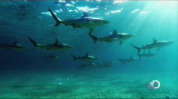 Discovery Channel Save the Sharks TV Spot Featuring Paul Walker - Thumbnail 4