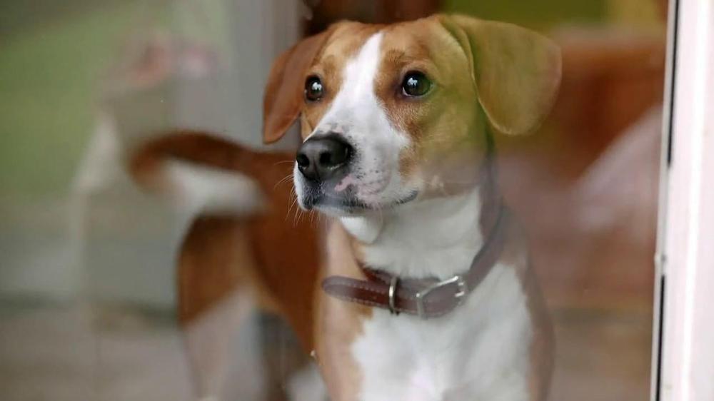 Iams So Good Dog Food Commercial Real Love