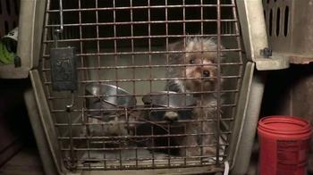 ASPCA TV Spot, 'Animal Rescue'