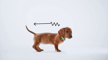 Tucker the Dachshund Puppy thumbnail