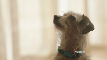Protect Your Dog thumbnail