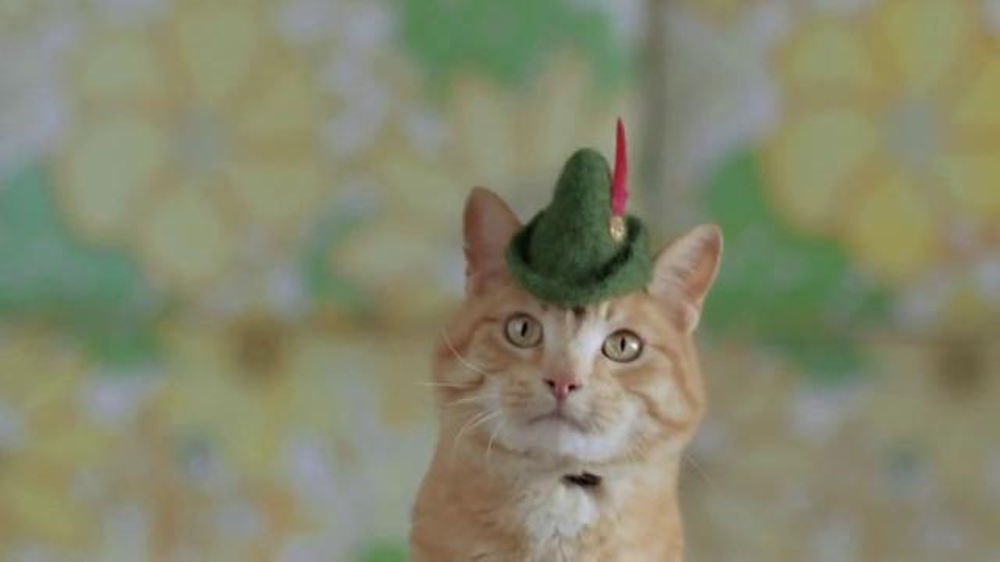 Godaddy Hats For Cats Commercial