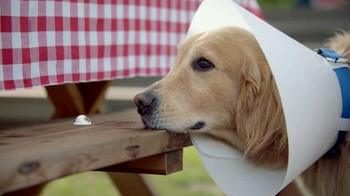 Blue Bunny Ice Cream TV Spot, 'The Dog in a Cone Can't Have a Cone'