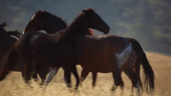 State Farm TV Spot, 'Wild Mustangs'
