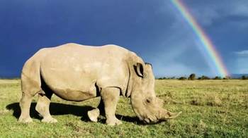World Wildlife Fund TV Spot, 'Saving Rhinos in the Wild'