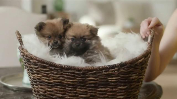 Sunshine and Puppies thumbnail