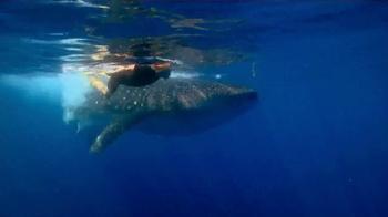 WildAid TV Spot, 'Whale Sharks' Featuring Sir Richard Branson
