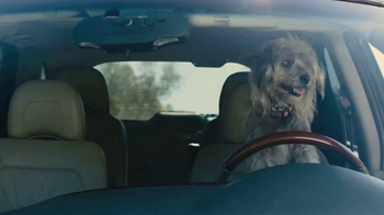 Farmers Insurance TV Spot, \'Chauffeur Terrier\' Featuring Rickie Fowler