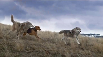 Blue Buffalo BLUE Wilderness  TV Spot, 'Wolf Dreams: Wild Rolls'