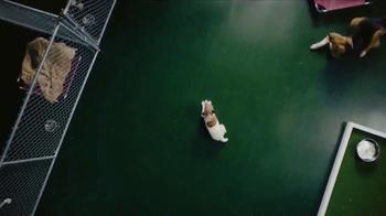 PetSmart TV Spot, 'Buy a Bag, Give a Meal' - Thumbnail 3