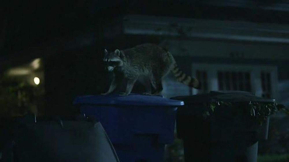 Geico Tv Commercial Raccoons C Mon Try It It S What