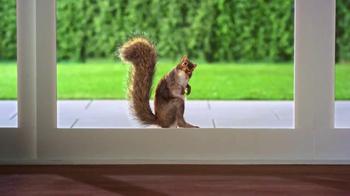 Mr. Squirrel thumbnail