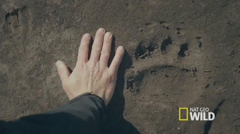 Subaru TV Spot, 'Nat Geo Wild: Denali National Park'