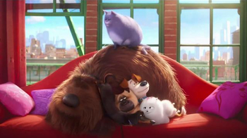 The Secret Life of Pets: Where Do They Go? thumbnail