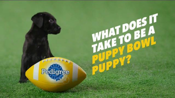 Puppy Bowl Tryouts No. 2: Speed thumbnail