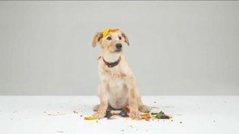 Pet Happens: Frosting thumbnail