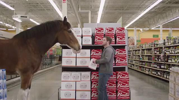 Budweiser Super Bowl 2016 Teaser, 'Act Like It: Clydesdale Beer Run'