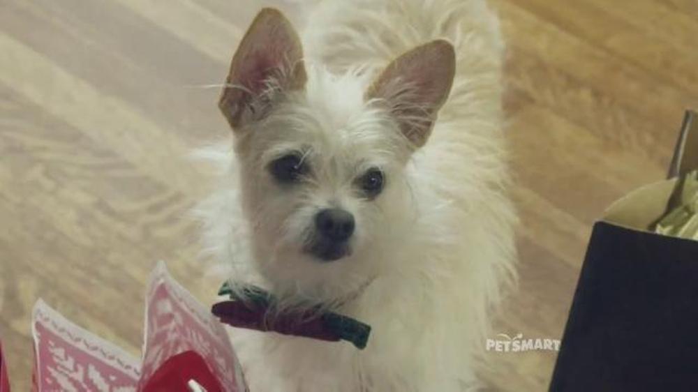 PetSmart November Weekend Sale TV Commercial, 'Good Boy' Song by ...