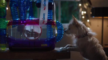 PetSmart Stocking Stuffer Treat Event TV Spot, 'Dreaming' Song by Queen