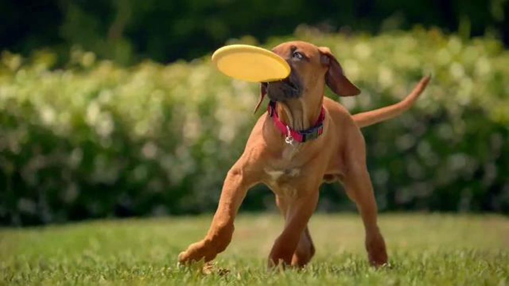 Purina One Commercial Dog Breed