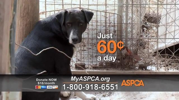 ASPCA TV Spot, 'No Protection'