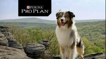 Purina Pro Plan TV Commercial, 'Possibilities' - Video