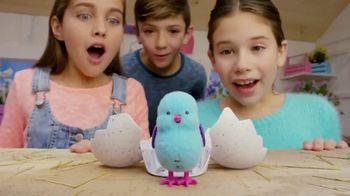 Little Live Pets Surprise Chick: Discovery thumbnail