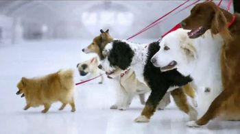 Kia Fall Savings Time TV Spot, 'Dog Walkers: 2017 Sportage' - Thumbnail 4