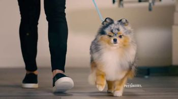 PetSmart Grooming TV Spot, 'Runway' Song by Meghan Trainor