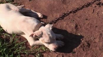 ASPCA TV Spot, 'Agonizing Conditions'