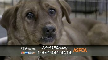 ASPCA TV Spot, \'Unbelievable\' Featuring Eric McCormack