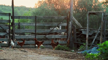 Nellie's Free Range Eggs TV Spot, 'Hens Are Friends' Song by Bob Dylan - Thumbnail 1