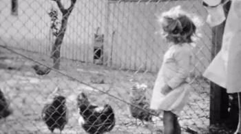Nellie's Free Range Eggs TV Spot, 'Hens Are Friends' Song by Bob Dylan - Thumbnail 7