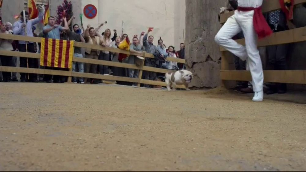 Geico Tv Commercial Running Of The Bulldogs Ispot Tv