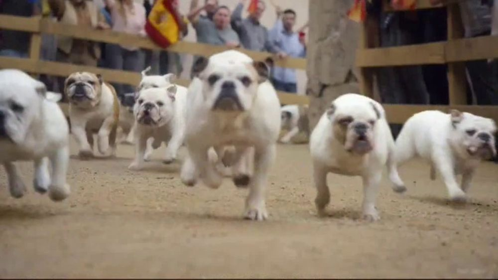 Geico Tv Commercial Running Of The Bulldogs Ispot Tv