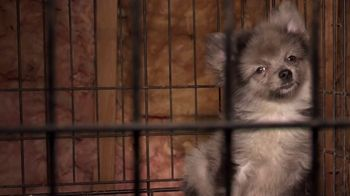 ASPCA TV Spot, \'Start Saving Animals\'