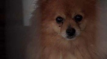 ASPCA TV Spot, 'Start Saving Animals'