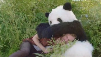 GoDaddy GoCentral TV Spot, 'Panda Breaks the Internet'